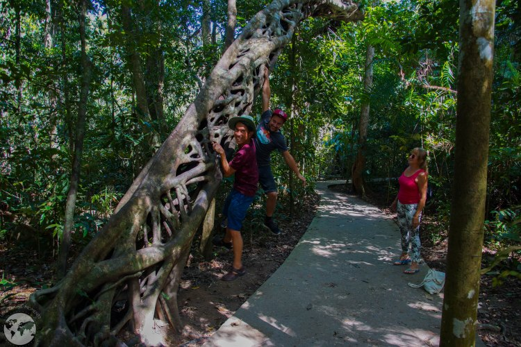 Forest Walk Daintree