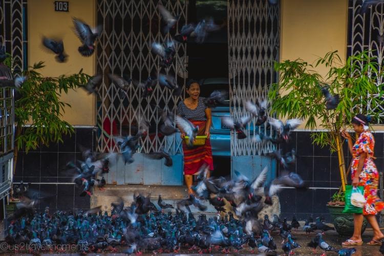 Yangon Pigeon