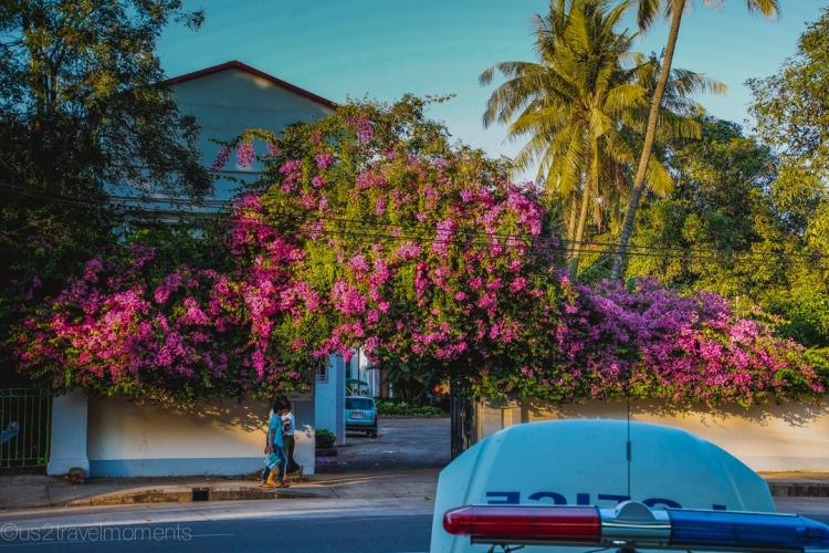 Yangon flowers
