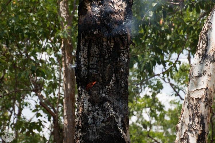 fire aurukun